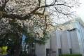 20200326学内の春 (01)